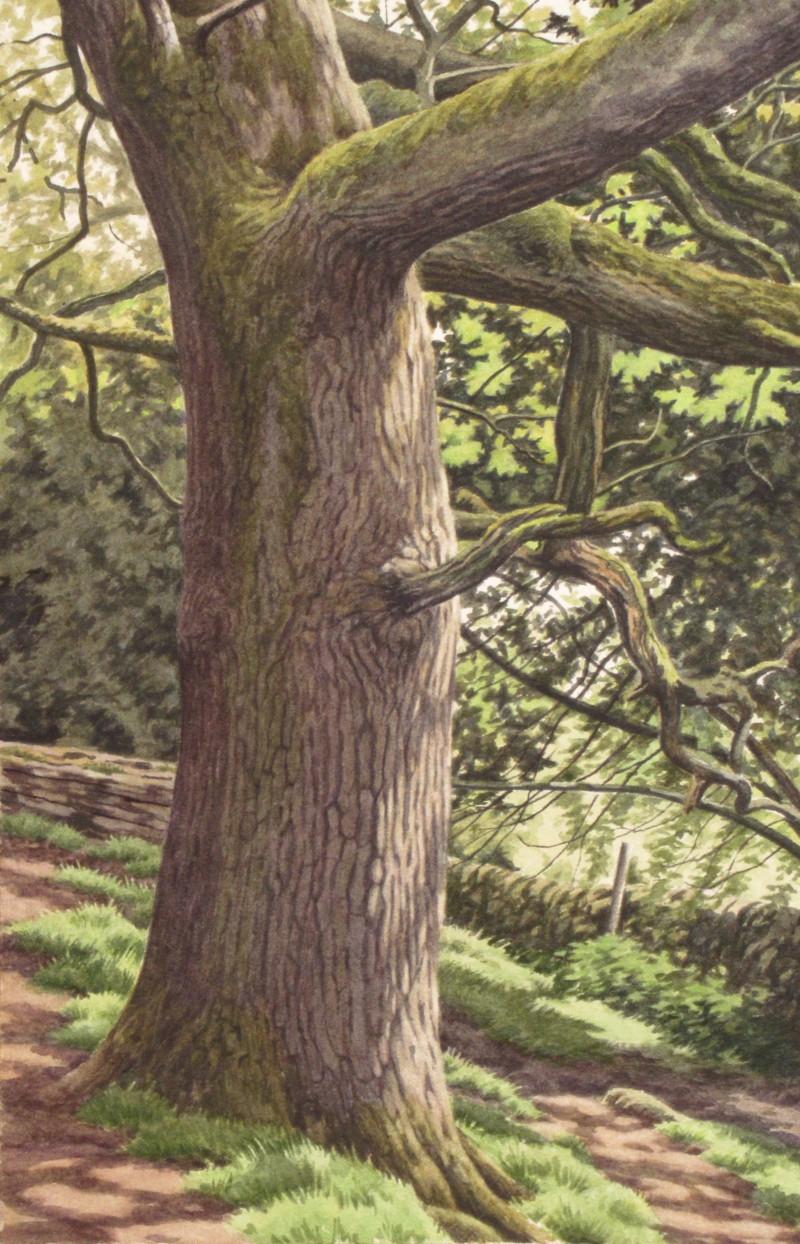 Oak tree 17 x 25.5 £400